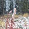 Wyoming 2013-071