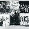 """Around the Plants"" Craddock Terry Jefferson (4451)"