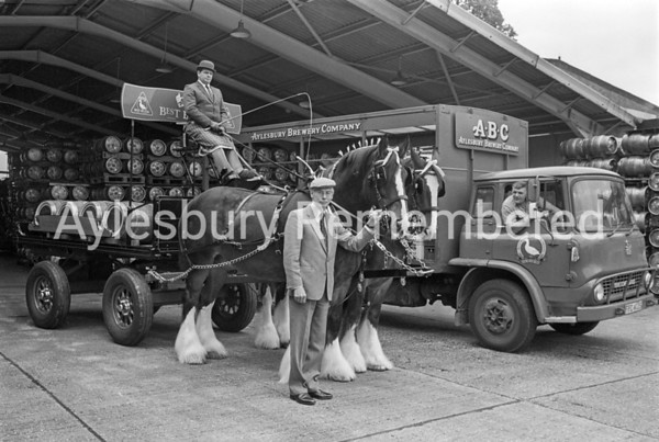 Horse drawn dray at Aylesbury Brewery Co, Sep 1985