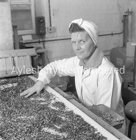 Mrs Cormack at Nestlé, Mar 24th 1962