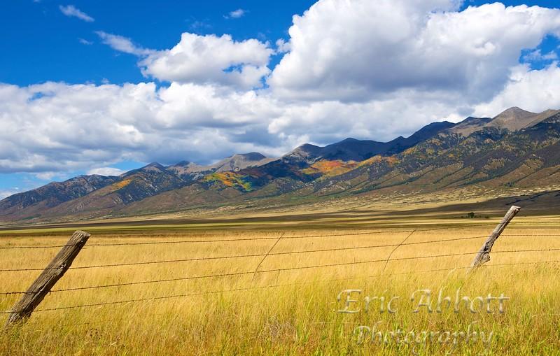 Colorado Aspens 14 - Version 4