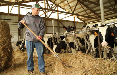 Leroy Bergbigler shovels hay closer to a cattle pen on his family dairy farm. Seb Foltz/Butler Eagle 05/14/20
