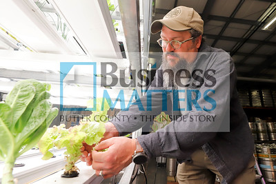 North Country Brewing Co. owner Bob McCafferty picks lettuce from one of the shelves of the brewery's aquaponics setups. The indoor system provides the restaurant with some of its greens. Seb Foltz/Butler Eagle Sept. 2020