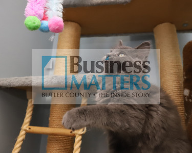 'Stormy,' a kitten at Butler Humane Society. Seb Foltz/Butler Eagle  (2020)