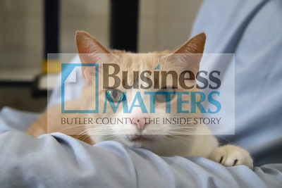 Cat at Butler County Humane Society. Seb Foltz/Butler Eagle (June 2020)