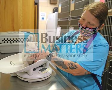 Butler County Humane Society vet tech Rachel McMichael weighs 'Possum,' a shelter kitten, in the shelter's animal intake exam room. Seb Foltz/Butler Eagle 06/26/20