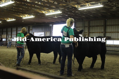 Fair Beef Cattle Show