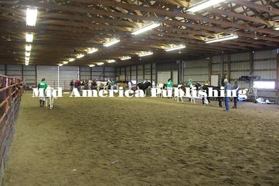 Fair Dairy Cattle Show