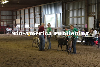 Fair Dairy Goat Show