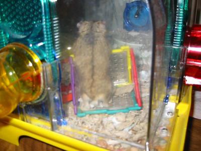 2002, Hammy the Hamster
