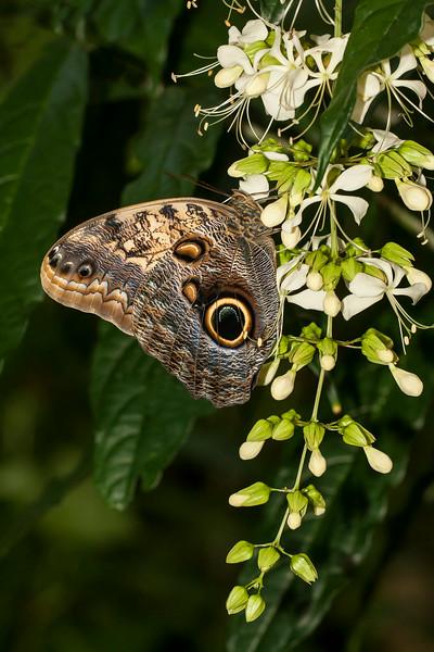Butterflies -Gainesville