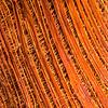 Palm Tree  Trunk Fibers