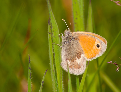 Small Heath 1