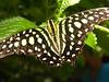 12_09_Butterflies_249