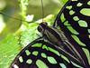 12_09_Butterflies_253