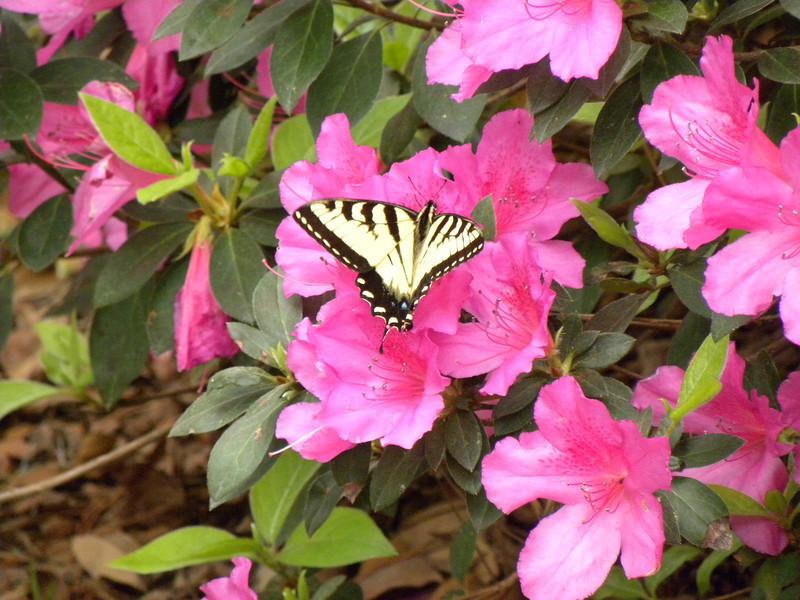 Savannah Botanical Garden