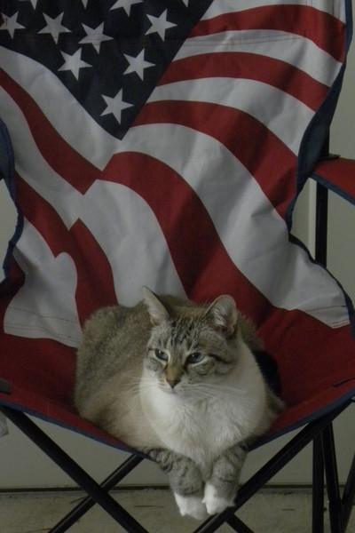My Patriotic Sylvester MiCato