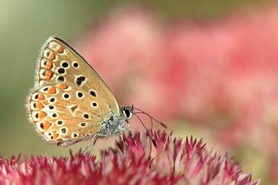 Papillon (2) by Bruno SUIGNARD
