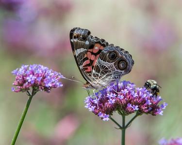 Butterflies, Skippers & Moths