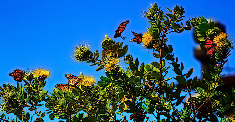 Butterfly Gathering