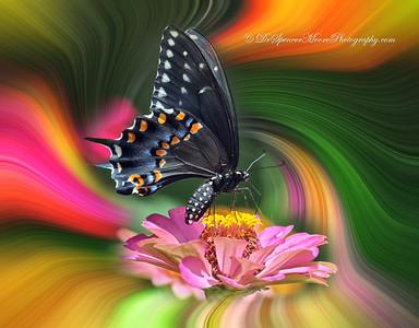 SVM_0561-t4-Swirl+Butterfly