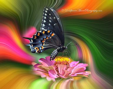 SVM_0561-t4-Swirl+Butterfly-2
