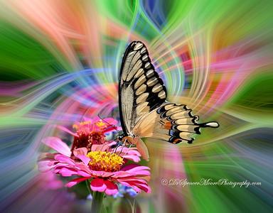SVM_4478-t5-twirl-Butterfly-5