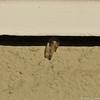 The empty chrysalis
