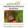 I have started a GoFundMe campaign to help me buy Milkweed plants! When I started raising Monarchs, I never realized I would have such success, and have so many caterpillars to feed, which continues to require plants to be purchased since I cannot grow them fast enough!  Monarch caterpillars ONLY eat Milkweed and 10 large caterpillars can eat one 2 gallon sized Milkweed plant within a few days. One 2 gallon sized Milkweed plant costs $29.99 at Armstrong Nursery and I purchase between 10 and 15 plants a week!!  I decided to ask for help, so I could continue to focus my attention on the Monarchs, instead of worrying how to pay for the endless Milkweed bill.  Please consider supporting my campaign for the Monarchs. Thank you!