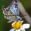 Butterfly Garden, Bowditch Park, Fort Myers Beach Florida