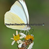 Butterfly and honey bee share a flower.