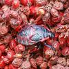 Unidentified Beetle, Birdsong Nature Center, FL