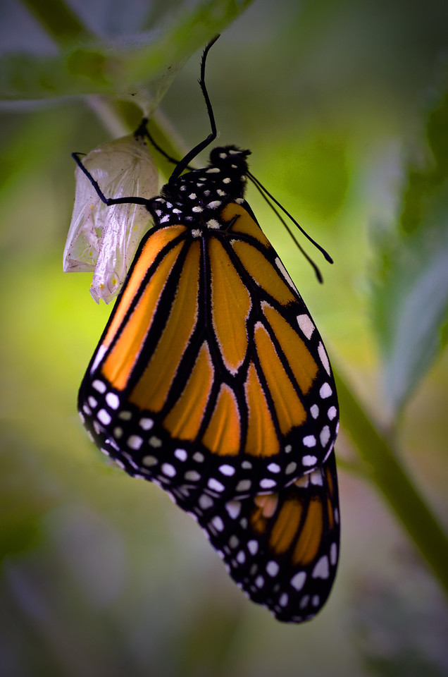 Butterflies and Winged Insects