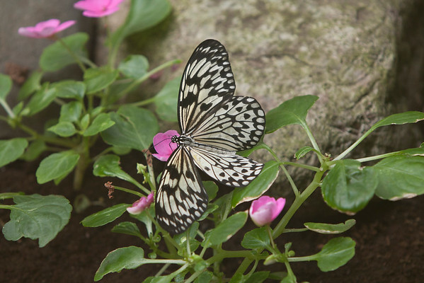 Butterflies, and other living creatures