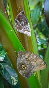 Powell Garden Butterflies-1-8