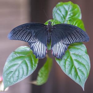 Powell Garden Butterflies-3