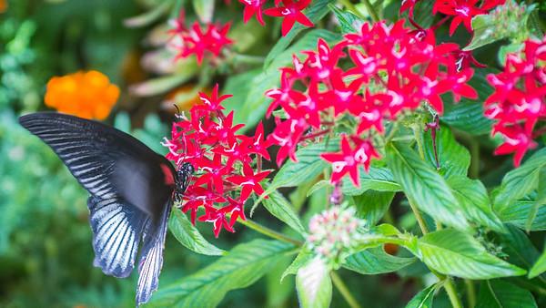 Powell Garden Butterflies-1-6