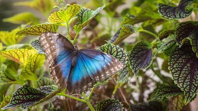Powell Garden Butterflies-6