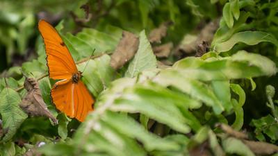 Powell Garden Butterflies-1-3
