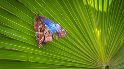 Powell Garden Butterflies-1-5