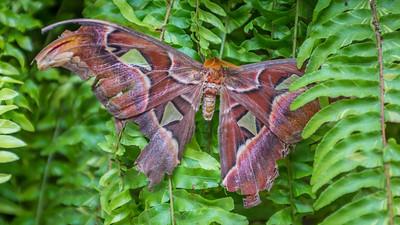 Powell Garden Butterflies-1