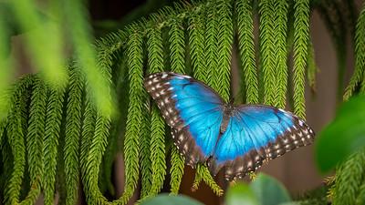 Powell Garden Butterflies-1-2