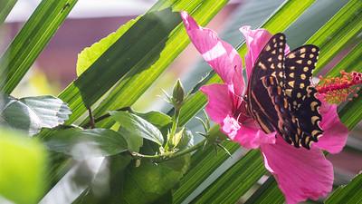 Powell Garden Butterflies-4