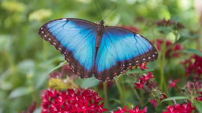 Powell Garden Butterflies-2