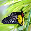 Closeup of black, yellow and white butterfly standing