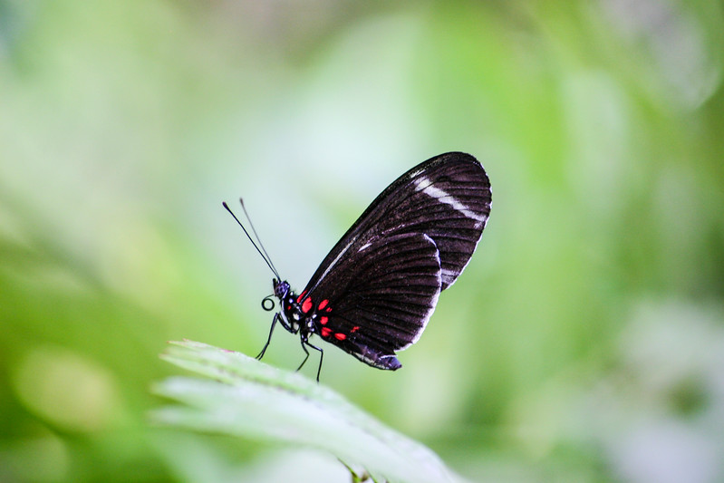 Closeup of red and black butterfly on a leaf