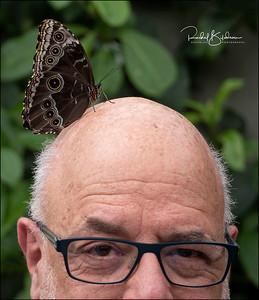 butterflies-190302_EM-5-M5028654