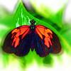 airbrush-heliconius-erato-DSC09911