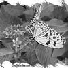 fr-bw-paperkite-bflyh-DSC00034