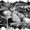 fr-bw-paperkite-bfly-stlz-DSC09282